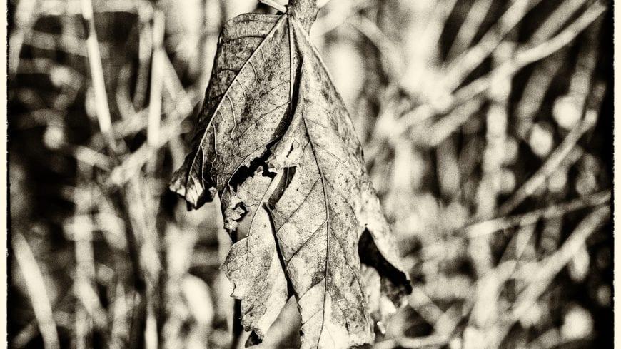 landschaft-black-white-10-von-19