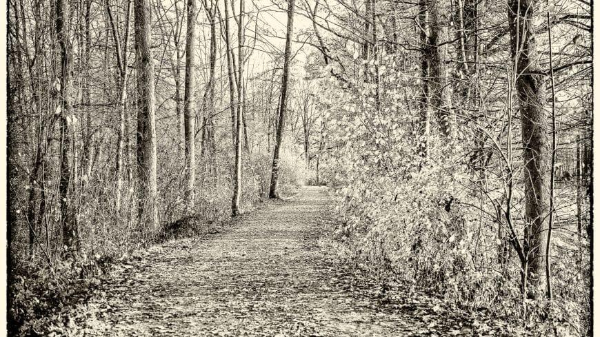 landschaft-black-white-11-von-19