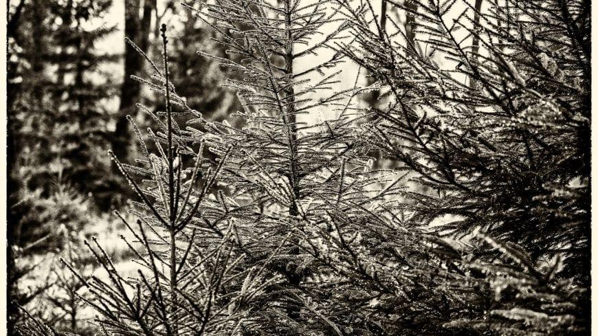 landschaft-black-white-15-von-19